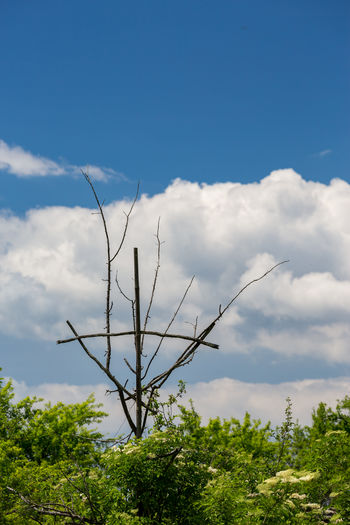 Bizarre tall cross made by dead tree branches in the spring with white clouds and blue sky behind Cross Dead Tree Religious Art Rhodopes Beauty In Nature Blue Branch Cloud - Sky Day Dead Green Color Growth Leshten Low Angle View Nature No People Outdoors Pirin Plant Religion Rhodopemountains Sky Tranquility Tree Wooden