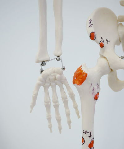 Close-up Detail Doctor  Fragility Hand Human Body Part Human Hand Indoors  Medicine Part Of Skeleton White