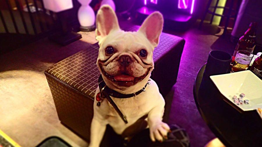 Smiling Dog Dog Dog Lovers🐾 Cute Lovely Taipei Bar Traveling Taking Photo Taipei,Taiwan Missmytraveldays Life