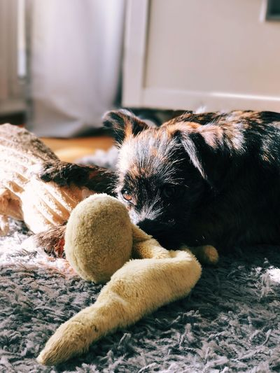 Dog relaxing on floor