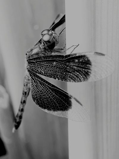 EyeEm Selects Insect Close-up Animal Themes Dragonfly