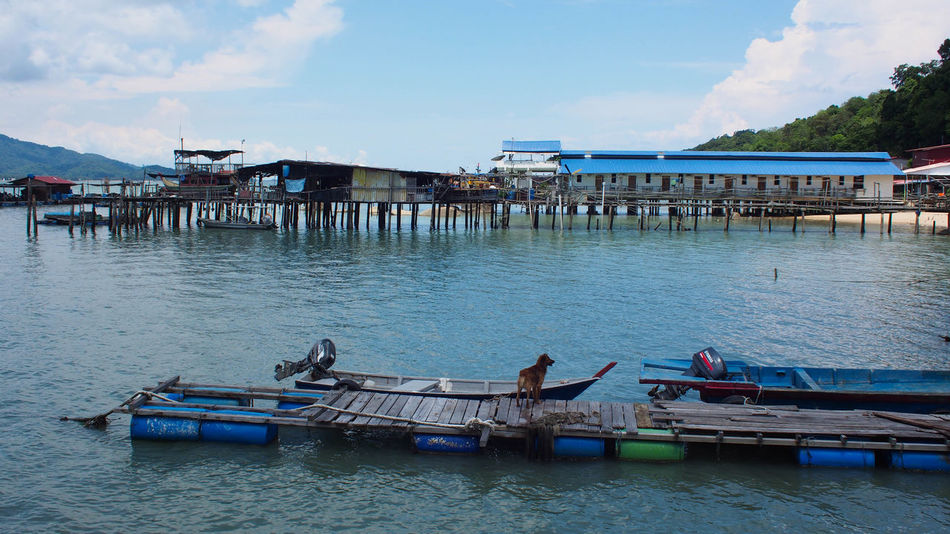 Tranquility view of blue ocean and blue sky on Pangkor Island, Malaysia Holiday Jet Boat Nature Ocean View Pangkor Island Beach Blue Blue Sky Blue Sky And Clouds Day Dog Nature Nature_collection Ocean Outdoors Rural Life Rural Scene Sand Sky Tranquil Scene Water Wooden Wooden Jetty