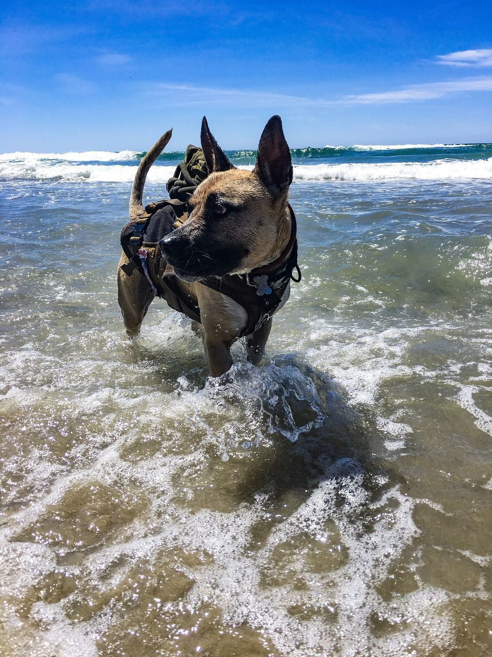 VIEW OF DOG IN SEA