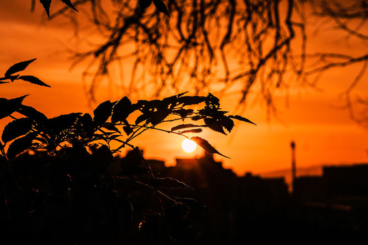 Sun Sunlight Sky Sunset Orange Color Nature Outdoors Beauty In Nature Sunrise Silhouette Focus On Foreground Plant No People Scenics - Nature Tree Tranquility Close-up Branch Growth Tranquil Scene Cloud - Sky Orange