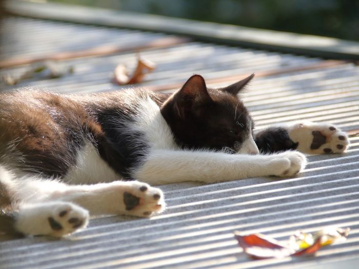Close-up of cat relaxing outdoors