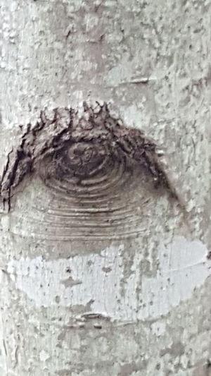Eye in trunk
