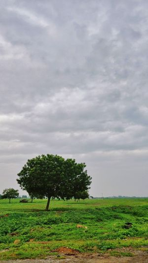 Tree Peace Village India Sky And Clouds Sky_collection Scenics Rainy Days Climate Rain Tree Field Cloud - Sky Agriculture Beauty In Nature No People Growth Nature Day Outdoors Landscape Rural Scene Sky Freshness