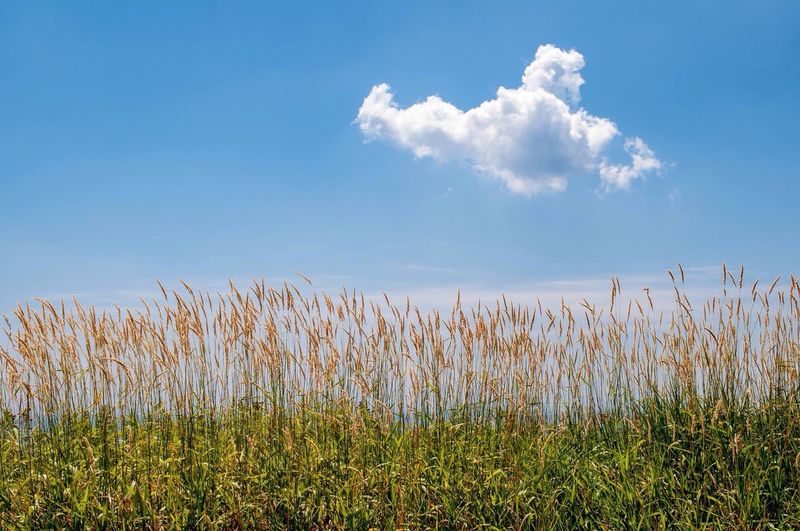 Close-up Of Plants Against Blue Sky And Clouds