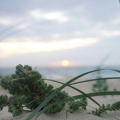 Summer Sunn Green Flower Chiclana Labarrosa Instalike Instamemories Instapaisaje Paisaje Like Like4like Like4follow Beatifull Perfect Landscape Landscape_photography Landscape_Collection Landscape #Nature #photography