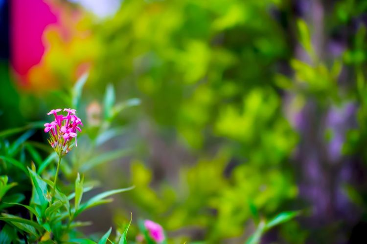 Flower Flowering Plant Plant Beauty In Nature Growth Fragility Freshness Vulnerability  Close-up Petal Green Color Nature Pink Color No People Day Inflorescence Focus On Foreground Flower Head Outdoors Plant Part Purple