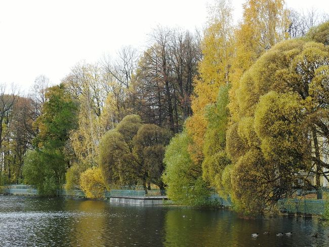 Tavrichesky Garden No Sun Beauty In Nature Water Tree Autumn🍁🍁🍁 Colors Of Autumn Fifty Shades Of Yellow Autumn Cityscape EyeEmNewHere Tree Lake City Freshness October Beauty In Nature Reflection Colors Of Sankt-Peterburg Sankt-Petersburg Russia