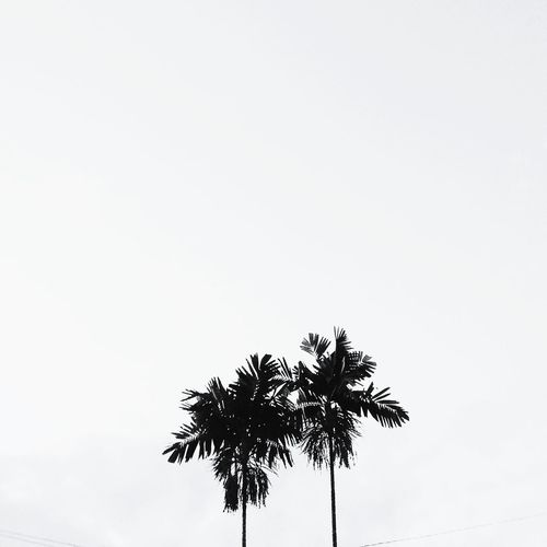 Cause you not alone🌴🌴Palm Tree Silhouette Clear Sky Tranquility Tranquil Scene Growth Beauty In Nature Nature Majestic Outdoors