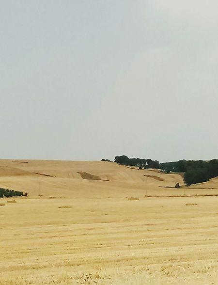 Andalucía Trigo Verano Sèquia Sand Dune Desert Cheetah Sand Arid Climate Sky Animal Themes Landscape Semi-arid