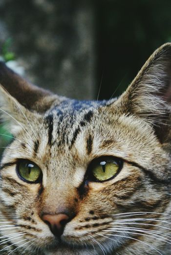 Make Magic Happen Cat Cat Lovers Cat♡ Playing With The Animals Face Eyetoeye Cateyes Animal Photography Street Cat