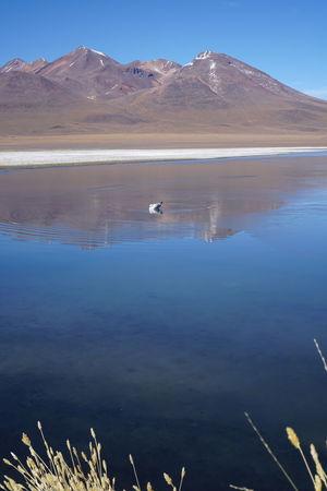 Bolivia Cañapa Lake Laguna Laguna ChiarCota Uyuni, Bolivia Laguna Cañapa Laguna Charcota Laguna Hedionda Viajeabolivia