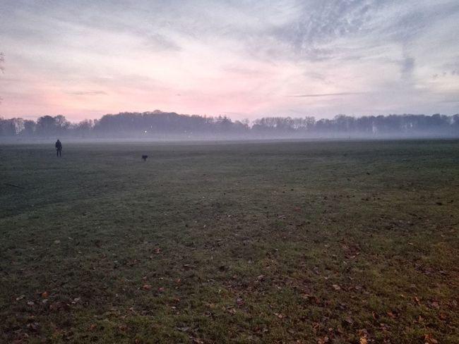 Park Fog Mist Dusk