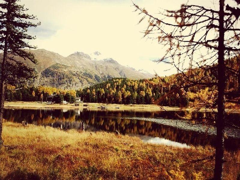 Autumn in the Engadin? Autumn Engadin Let#your#spirit#fly#enjoy#switzerland#engadin#sweet#home Engadin_sweet Home