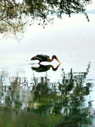 First Eyeem Photo Waterreflection Birdwatching Thol Lake