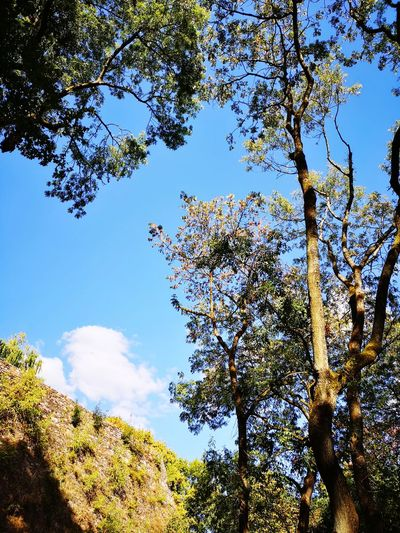 Castle Tree Branch Blue Forest Fruit Sky Treetop Countryside