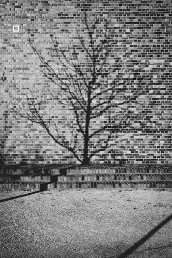 Shadows & Lights Architecture Brick Brick Wall Building Building Exterior Built Structure City Day Growth Nature Nature Vs Concrete Plant Shadow Shadow In The Wall Textured  Tree Shadow Wall Wall - Building Feature