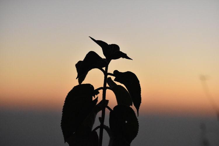Silhouette bird against sky during sunset