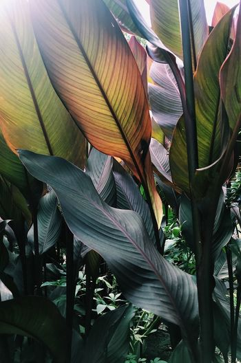 Tasty Botanical Garden Growth Plant Leaf Plant Part Nature Close-up Beauty In Nature Day No People Green Color Freshness Banana Tree Fragility Outdoors Banana Tree Vulnerability  Sunlight Flower Tranquility