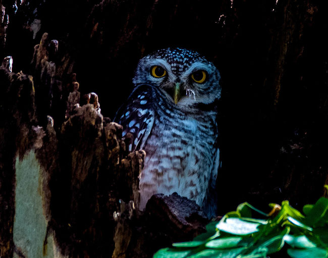 Growth In The Dark Leave Me Alone Midnight Owl No Fear!! Owl In The Dar Owl Zo Stand Alone At Midnight Where's Potter?