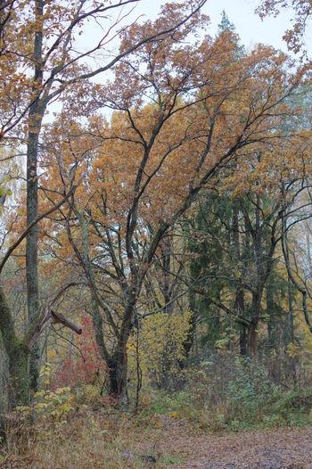 Лес листья