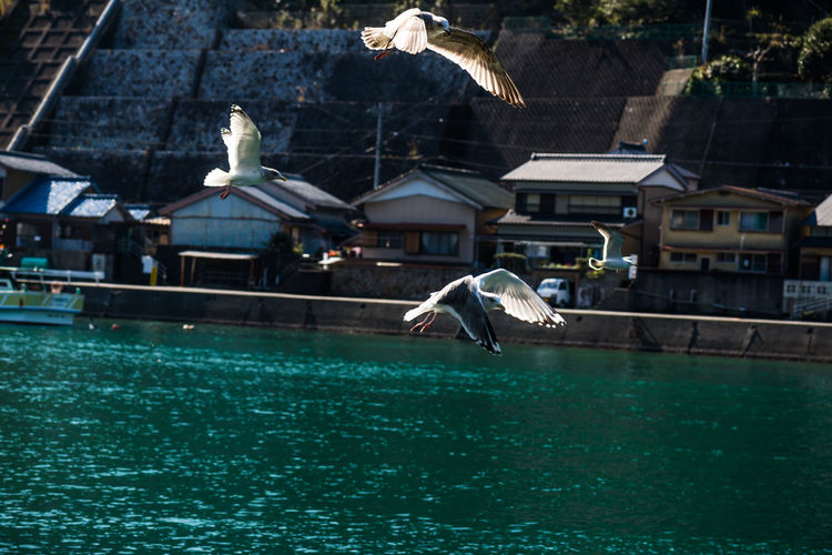 Seagulls flying over swimming pool