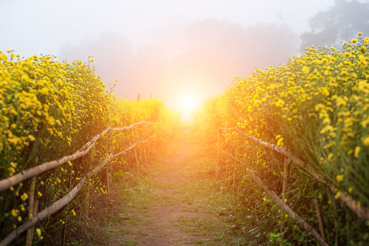 Flower garden Plant Beauty In Nature Land Sky Yellow Landscape Nature Tranquility Growth Tree Flower Sunlight Rural Scene Field Agriculture No People Sun Scenics - Nature Environment Outdoors Lens Flare Bright