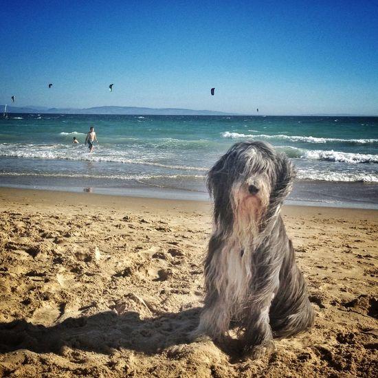 EyeEmBestPics Dog Instagood Mai en Tarifa