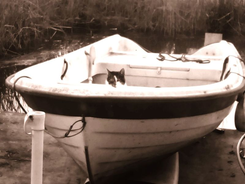 Familylife Cat when will we go Boat -ing again? Domesticlife Vinkeveen Holland