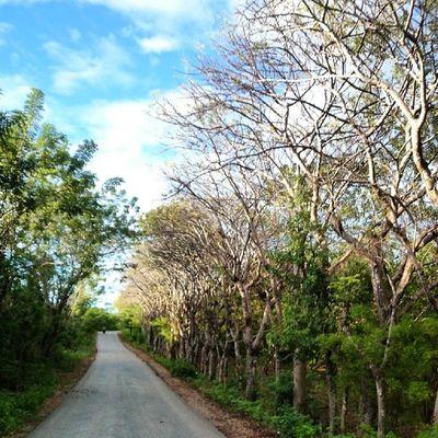 Road to home...Kamerahpgw_Kupang Kamerahpgw Xtraordinarynoya
