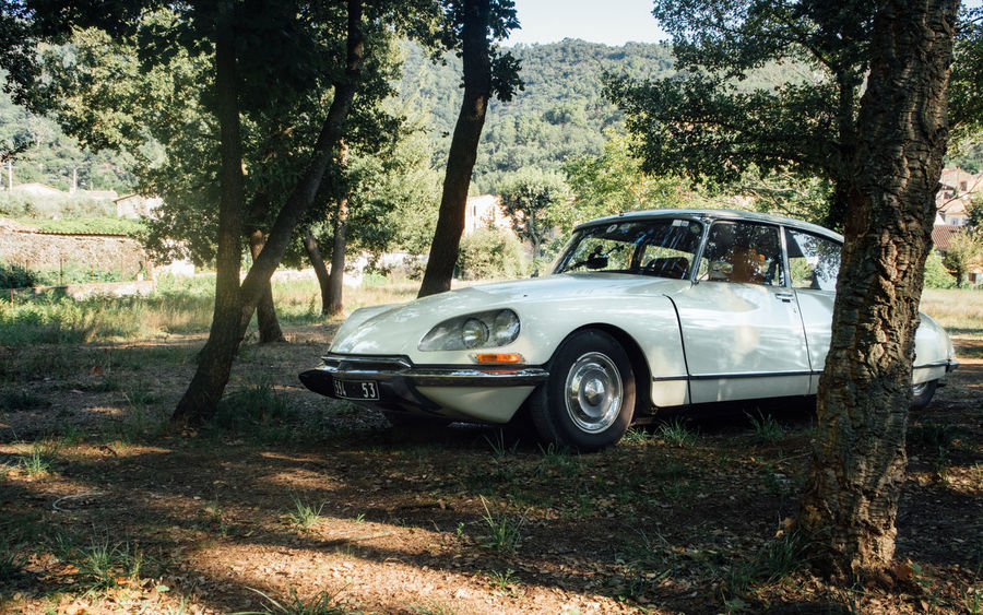 Citroën DS French Car French Design Abandoned Car Citroen Day Déesse Field Land Land Vehicle Mode Of Transportation Motor Vehicle Nature No People Outdoors Plant Retro Styled Silver Colored Sunlight Transportation Travel Tree Tree Trunk Trunk