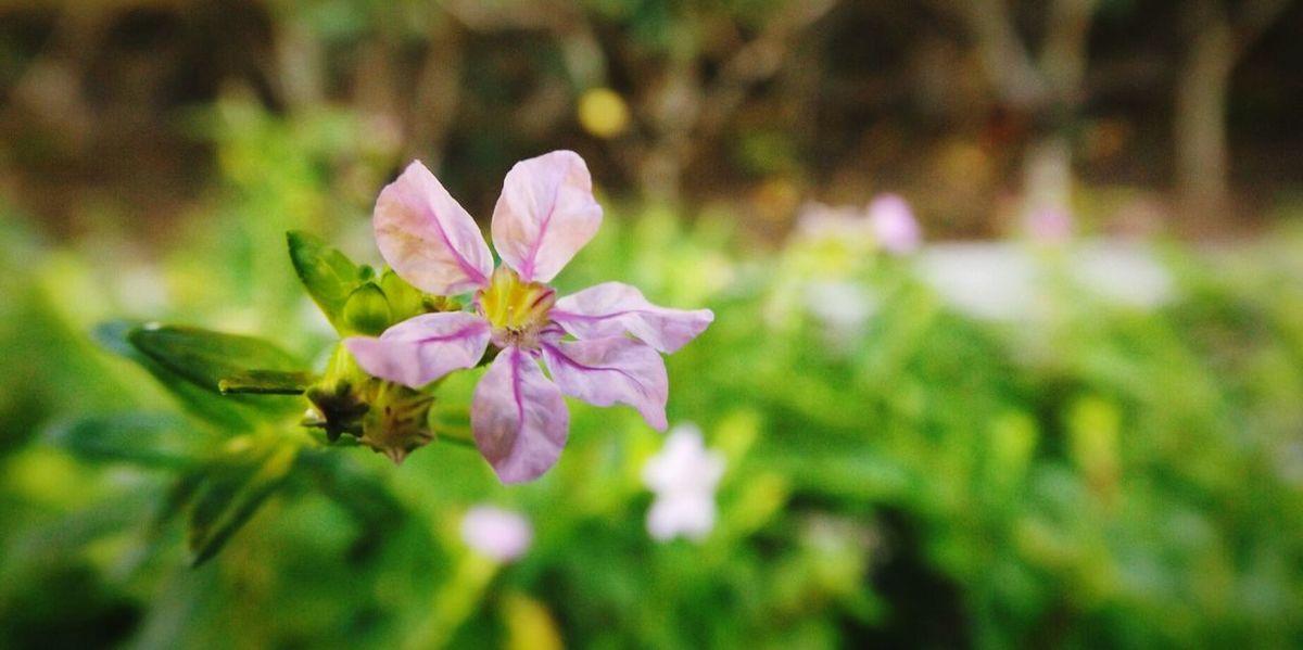 Nature Photography Flower Macro Photography Beautifulflower  Violet