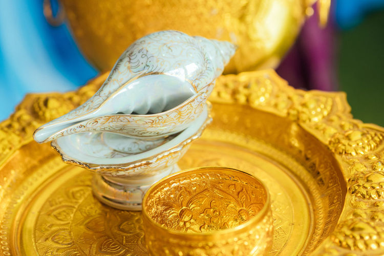 Close-up of conch shell on plate