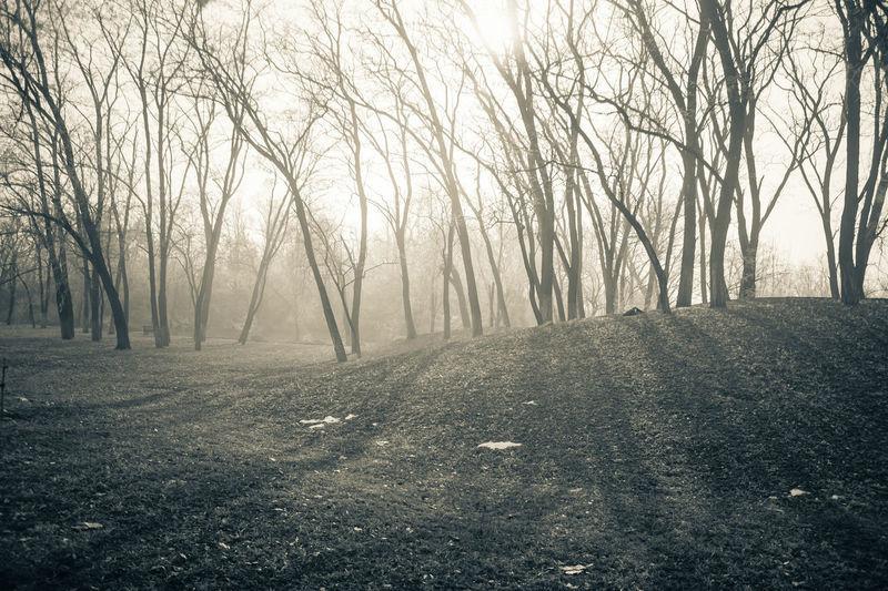 户外 雾霾 树木