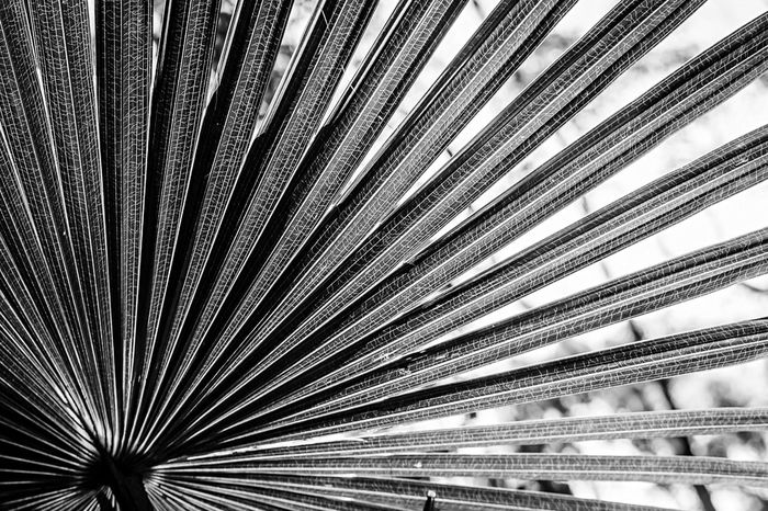 Fan out... Monochrome Silhouette Against The Light Blackandwhite Black And White Nature EyeEm Nature Lover Australia Pattern Pieces