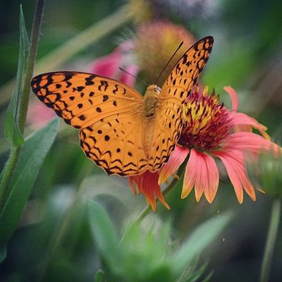 Gagans_photography Love Butterfly Instaludhiana
