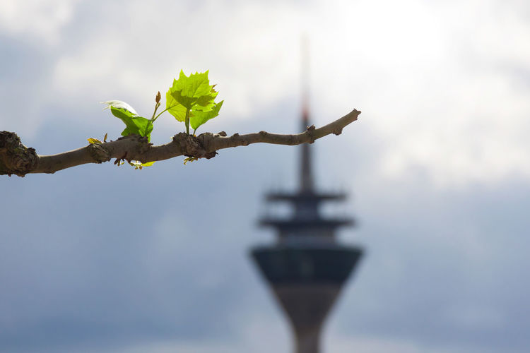 Rheinturm, Duesseldorf, Germany Backlit Beginnings Blackandwhite Blue Deutschland Duesseldorf Düsseldorf Focus On Foreground Frühling Gegenlicht Germany Green Growing Leaf Leaf Vein No People Relaxing Moments Rheinturm  Spring Focus Object Adapted To The City
