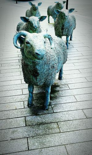 Taking Photos Creative Light And ShadowSheep🐑 Sheep Baar Sculptures Urban Sculpture Stone Sculptures EyeEm Best Shots Stone Statue
