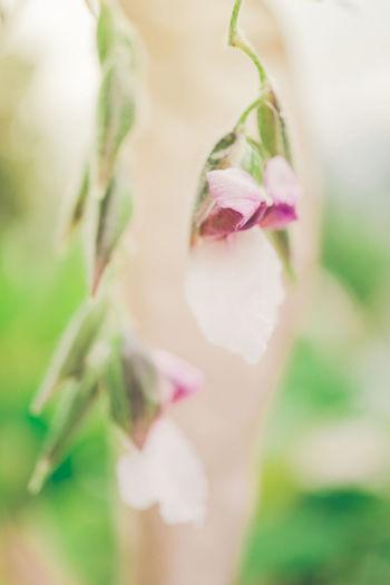 Close-up of a