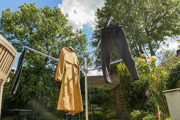 Low angle view of clothes hanging from plant against trees