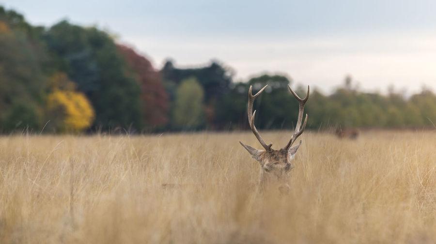 Deer amidst plants