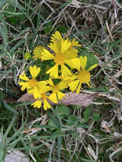 Maximum Closeness Day Nature No People Outdoors Flower . Yellow Flower