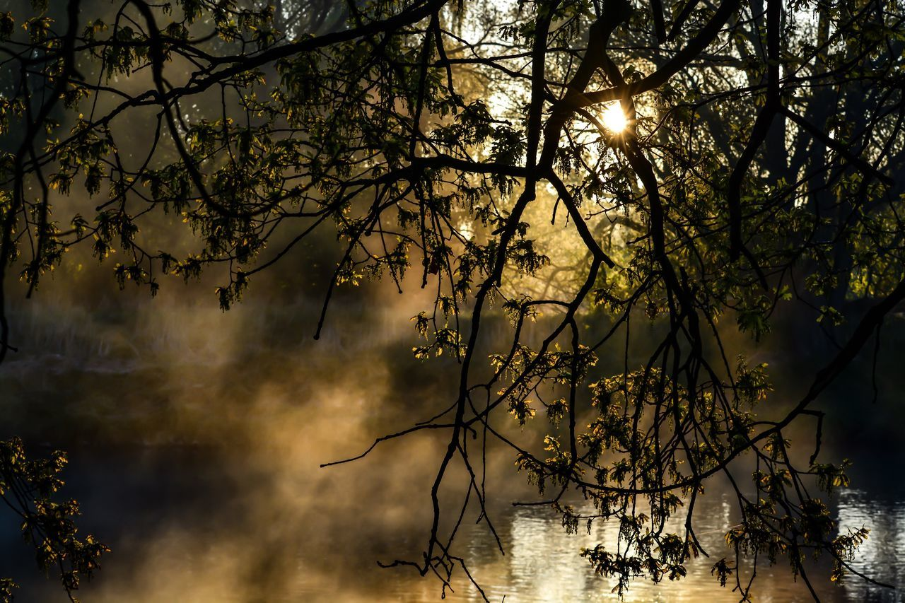 tree, nature, no people, tranquility, branch, beauty in nature, tranquil scene, outdoors, water, scenics, night, sky