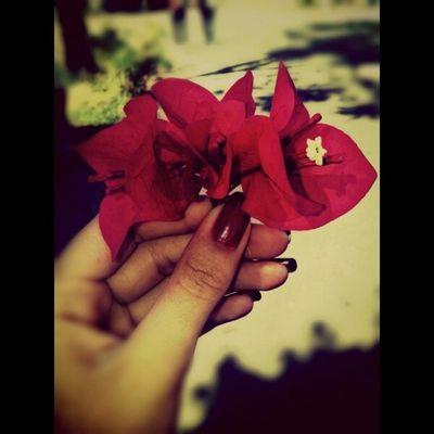 Aquele momento que você rouba uma florzinha apaixonante na rua. ◑ω◐ ? ? ?