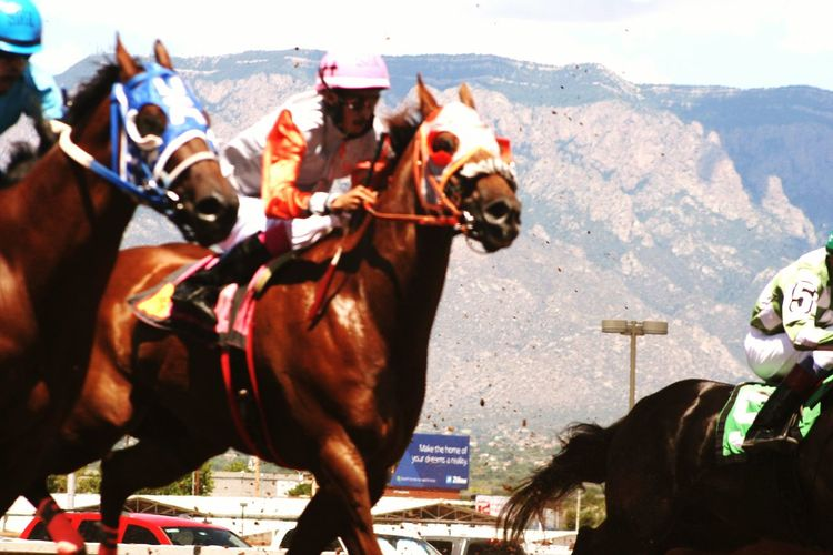 Horse Adult Riding Animal People Horseback Riding One Person One Man Only Only Men Mammal Headwear Adults Only Outdoors Animal Themes Day Competition Full Length Mountain Domestic Animals Working Arrington Racing Thoroughbred Albuquerque, NM New Mexico, USA Sports Race