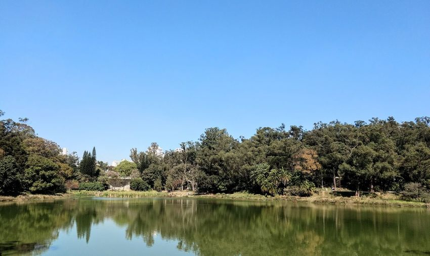 Reflection Tree Lake Water Nature Sky Clear Sky Outdoors Beauty In Nature No People Scenics Tranquility Day Plant EyeEm Best Shots Smartphone Photography Full Frame Beauty EyeEmBestPics Backgrounds EyeEm Nature Lover Nature Beauty In Nature Smartphonephotography