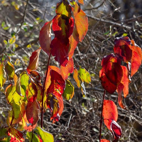 Canon EOS 60D Red Growth Plant No People Nature Day Close-up